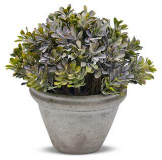 20.9x22cm Tea Leaf Bush- Rnd Cement Pot