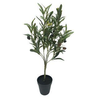 Olive Tree 65cm In Black Pot 10x10cm