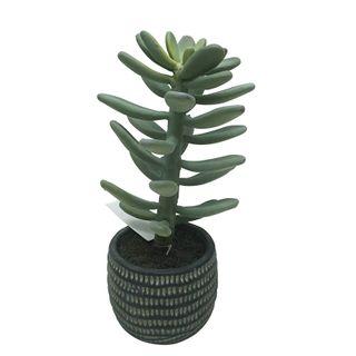 Succulent 30cm In Black Cer Pot 10x9cm
