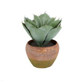 Aloe Lge Leaf 25cm W/Terra Pot 14x12cm