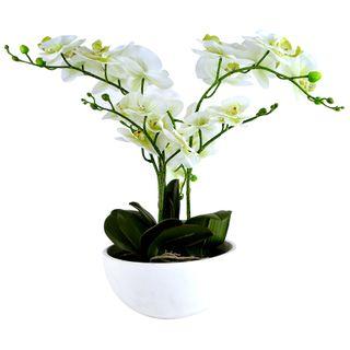 Philaenopsis Orchid 50cm In Bowl 22x11cm
