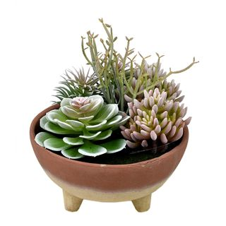 Succulents W/Tahoe Footed Bowl 24x25cm