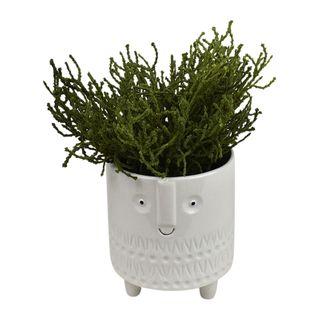 Ben Succulent 25cm Footed Wh Pot 11x13cm