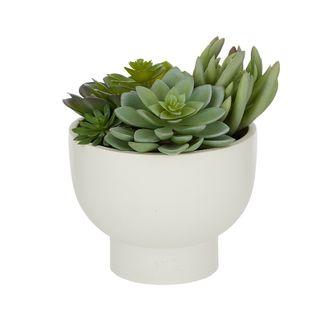 Succulents In White Ceramic Bowl 21x19cm