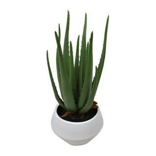 Aloe 44cm In White Pot 19x14.5cm