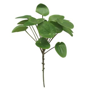 Money Plant Real Touch Stem 50cm