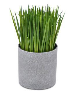 10.8x19cm Onion Grass- Round Grey Pot