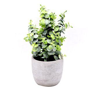 16x29cm Eucalyptus Plant In Cement Pot