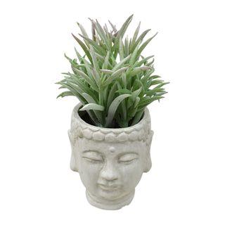Succulent 18cm W/Buddha Pot 7.5x9.5cm