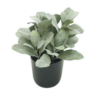 Lamb Leaf 28cm In Blk Pot 12x11.5cm