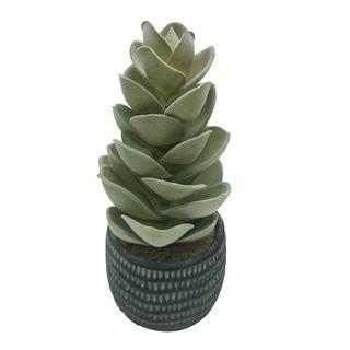 Succulent 24cm In Black Cer Pot 10x9cm#
