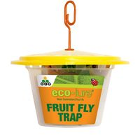Eco Lure Fruit Fly Trap