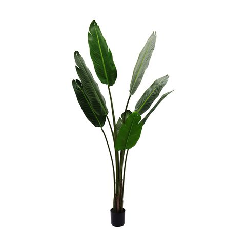 Strelitzia Artificial Tree -150cm