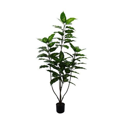 Dieffenbachia Artificial Plant - 150cm