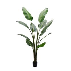 Strelitzia Artificial Tree -180cm
