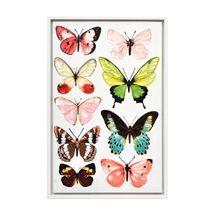 Papillon Enhanced Canvas Print