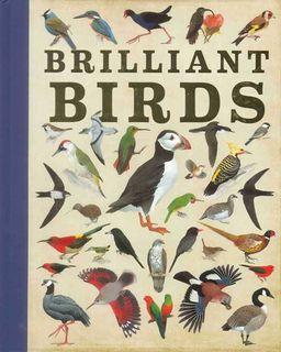 Brilliant Birds