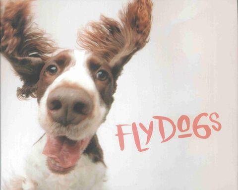 Flydogs