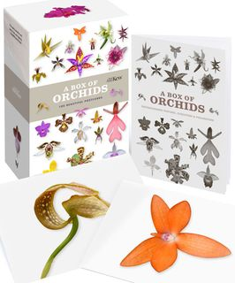 A Box of Orchids