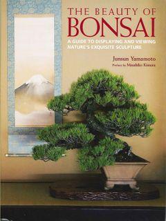 Beauty of Bonsai