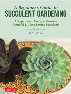 Beginner's Guide to Succulent Gardening