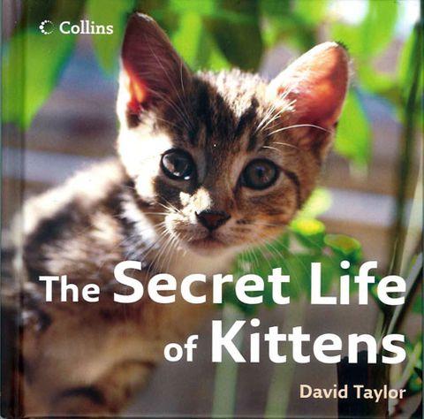 Secret Life of Kittens