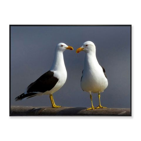 Gull Talk Framed Canvas Print 60x45