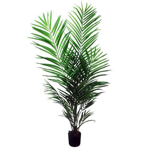 Areca Palm 122cm