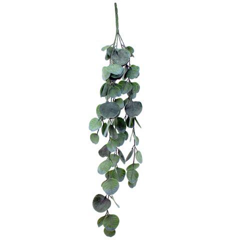 Hanging Eucalyptus 68.5