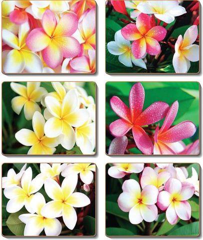 Coasters Frangipani Garden 12x10 cm