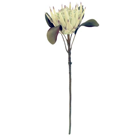 Protea Single Sage 66cm