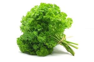 PARSLEY CURLY x BUNCH