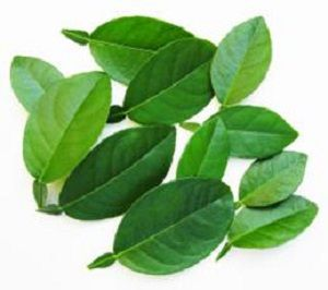 LIME LEAVES  x 10g PACKET
