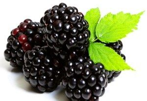 BLACKBERRIES x EA