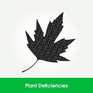 Learn Hydroponics - Deficiencies