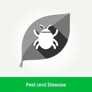 Learn Hydroponics - Pests