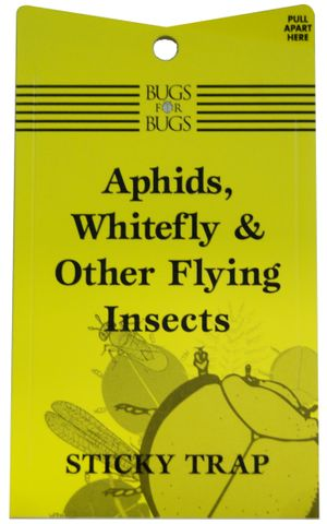 Sticky Trap for Flying Insects