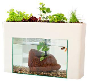 Aqua Sprout Grow Bed & Tank Kit 40L