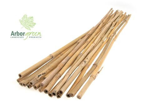 Bamboo Canes 8-10 x 600mm - 500/Bale
