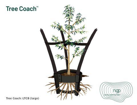 Tree Coach - Large