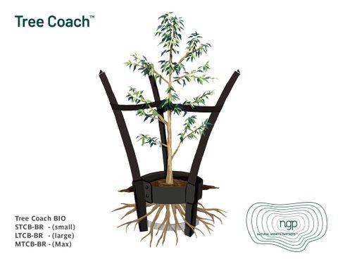 Tree Coach Bio - Max