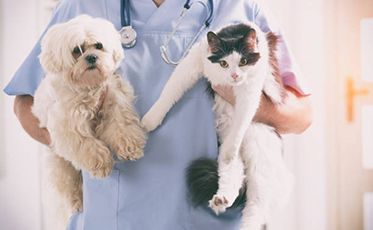 Vet nurse holding cat and dog