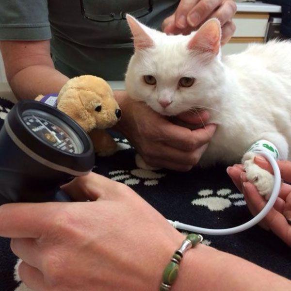 MAI Sentier CAT+ Companion Animal Doppler/Blood Pressure Monitor