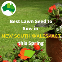 Best Lawn Seed for NEW SOUTH WALES AND ACT IN SPRING