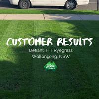 CUSTOMER LAWN - Defiant TTT Ryegrass, Wollongong NSW