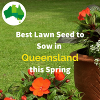 Best Lawn Seed for QUEENSLAND IN SPRING