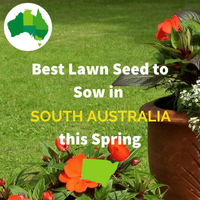 Best Seed for SOUTH AUSTRALIA IN SPRING