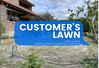 CUSTOMER'S LAWN:  ROYAL BENGAL COUCH | VICTORIA