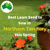Best lawn seed for the NORTHERN TERRITORY IN SPRING