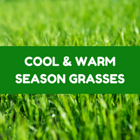 Cool & Warm Season Grasses